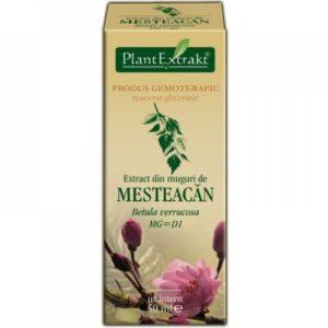 Brzoza brodawkowata Betula verrucosa Mesteacan PlantExtrakt 50 ml