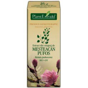 Brzoza omszona Betula pubescens Mesteacan PlantExtrakt 50 ml
