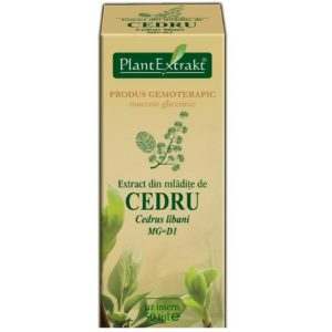 Cedr libański (Cedrus libani surculis) Cedru PlantExtrakt 50 ml