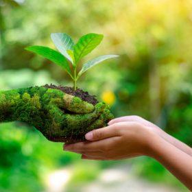Certyfikat ekologiczny