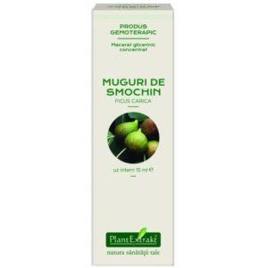 Figowiec pospolity Macerat glicerynowy (Ficus carica) PlantExtrakt 15 ml