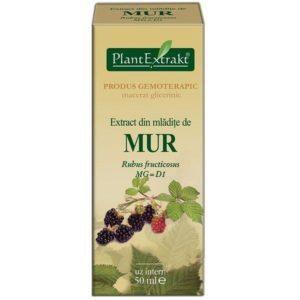 Jeżyna bezkolcowa (Rubus fruticosus) MUR PlantExtrakt 50 ml