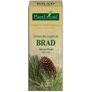 Jodła pospolita (Abies pectinata) BRAD PlantExtrakt 50 ml