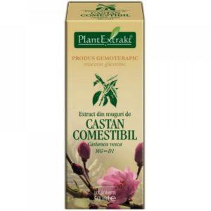 Kasztan jadalny (Castanea vesca) Castan Comestibil PlantExtrakt 50 ml