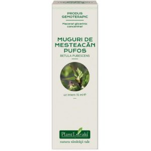 Betula pubescens macerat glicerynowy PlantExtrakt Brzoza omszona