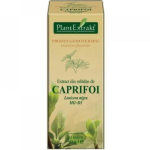 PlantExtrakt Caprifoi Wiciokrzew czarny (Lonicera nigra) 50 ml