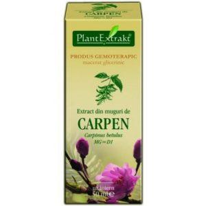 PlantExtrakt Carpen Grab pospolity (Carpinus betulus) 50 ml