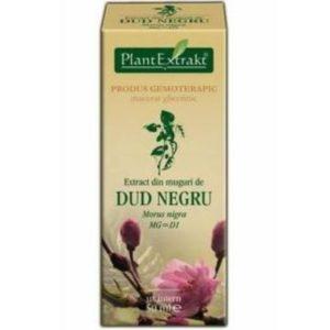 PlantExtrakt Dud Negru Morwa czarna (Morus nigra) 50 ml