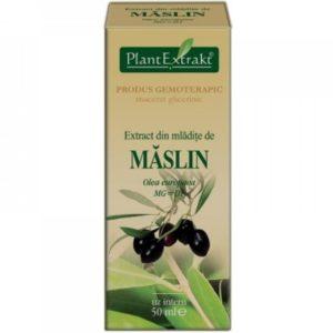 PlantExtrakt Maslin 50 ml | Suplement z oliwki europejskiej