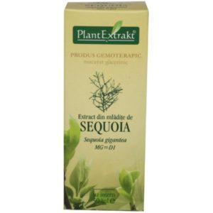 PlantExtrakt Sequoia Sekwoja olbrzymia (Sequoia gigantea) 50 ml