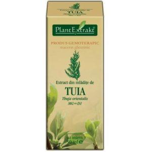 PlantExtrakt Tuia Thuja orientalis (Tuja) 50 ml